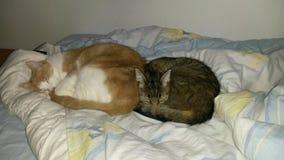 спать котов стоковые изображения rf