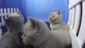 Спать котят новорожденного сток-видео