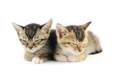спать котят стоковые изображения rf