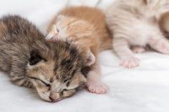 Спать котят newborn на белом ковре Стоковая Фотография