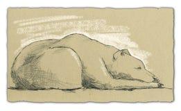 спать медведя произведения искысства Стоковые Фотографии RF