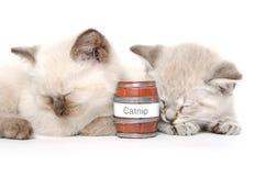 Спать 2 милый котят стоковое фото rf