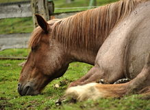 Спать лошади стоковое изображение