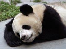 спать панды Стоковое Изображение