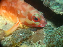спать рыб Стоковые Фото