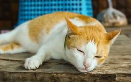 спать сала кота Стоковые Изображения