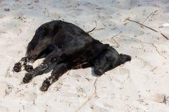 спать собаки пляжа Стоковые Фото