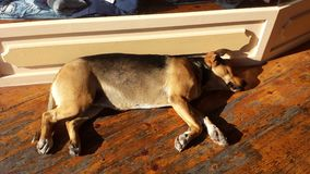 Спать собаки улицы стоковые изображения rf