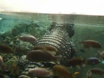 Спать с рыбами стоковые изображения rf