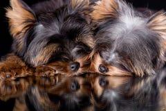 спать щенка Стоковое фото RF