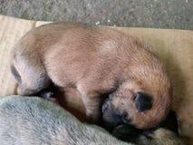 спать щенка стоковое изображение rf