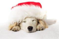 Спать щенка labrador рождества Стоковые Изображения RF