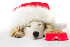 Спать щенка labrador рождества Стоковое Изображение RF