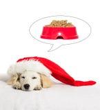 Спать щенка labrador рождества Стоковые Фото