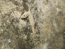Спад жизни ящерицы стоковая фотография rf