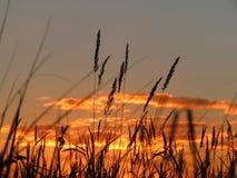Спад золота в поле Стоковые Фото