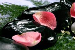 спа лепестков розовая Стоковые Изображения