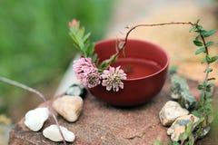спа 7 Чай клевера (трилистника) травяной Стоковые Фото