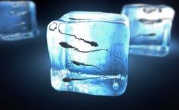 Сперматозоиды, который замерли в куб льда бесплатная иллюстрация
