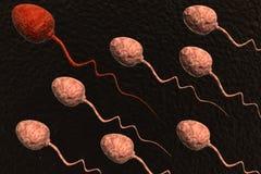 сперма клеток состязаясь иллюстрация вектора