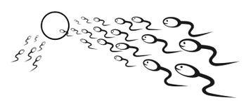 спермы яичка Стоковое Фото