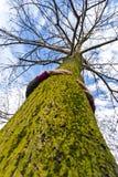 Специалист по охране окружающей среды hugger дерева стоковые фото