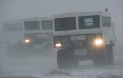 Специальное ATVs для ледовитой езды сафари в пурге Национальный парк Черчилля, Канада Стоковое Изображение RF