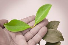 Специальные листья Стоковое Изображение