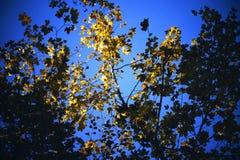 Специальные листья Стоковые Фотографии RF
