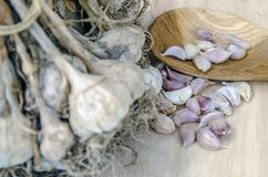 Специи варя ел чеснок еды Стоковые Фотографии RF
