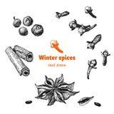 Специи зимы изолированные на белом векторе вручают вычерченную иллюстрацию Стоковые Изображения