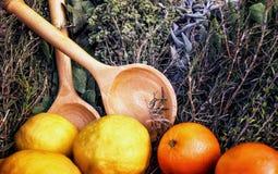 Специи и травы Померанцы и лимоны Комплект средневековой хозяйки стоковое фото rf