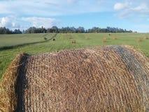 специфический сена поля bales румынское Стоковые Фото