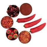 специя выбора chili Стоковое Изображение