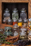 специя ингридиента трав еды базилика растущая Стоковые Изображения RF