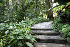 специя сада тропическая Стоковое Изображение RF