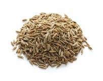 специя семян тимона индийская Стоковая Фотография RF