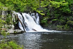 Спеша водопад Стоковые Фотографии RF
