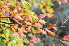Спелые цвета Стоковые Изображения RF