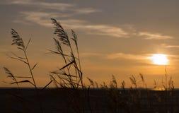 Спика и заход солнца Стоковые Изображения
