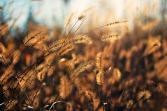 Спики увиденные солнечным светом throung чувствительные Стоковое Изображение