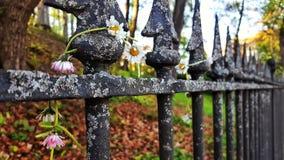 спиковая железная загородка Стоковая Фотография RF