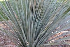 Спиковое кактуса близкое поднимающее вверх очень большое Стоковые Изображения RF