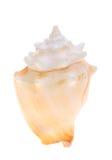 Спиковой seashell стоковые изображения rf
