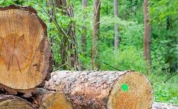 Спиленные стволы дерева в лесе стоковая фотография rf