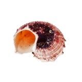 Спиральн Seashell Стоковые Фото