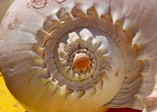 спираль раковины Стоковые Фотографии RF