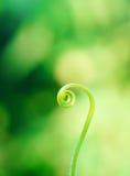 спираль Стоковая Фотография