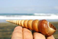 спираль seashell Стоковое фото RF