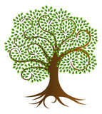 Спиральная иллюстрация вектора дерева стоковая фотография rf